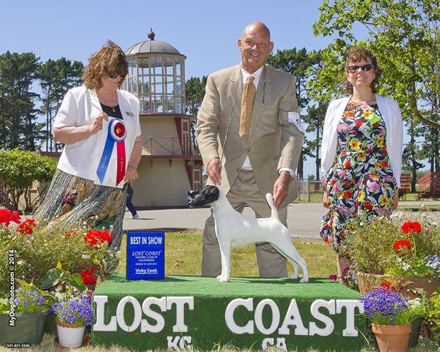 Absolutely Talk of the Town captions herself. - PHOTO BY WARREN COOK, COURTESY OF LOST COAST KENNEL CLUB