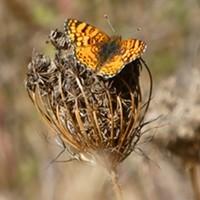 HumBug: Lepidoptera