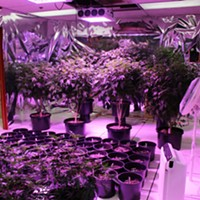 Major Pot Bust Yields 1 Arrest, More Expected