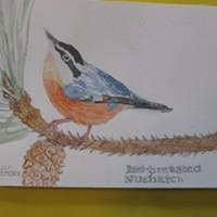 Student Bird Art Winners Show