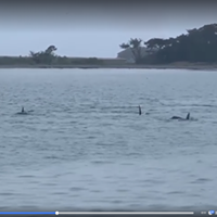 UPDATED: Orcas Spotted in Humboldt Bay (With Video)