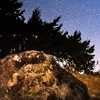 North Coast Night Lights: Unexpected Magic: Rabbit Stargazer