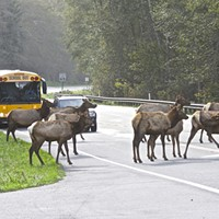 Watch Out for Wandering Wildlife in the Roadways