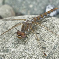 HumBug: Winter Insects