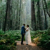 A Wedding in the Redwoods