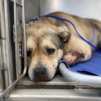 UPDATE: Reward Offered in Dog Cruelty Case