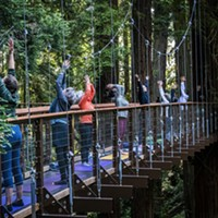 Photos: Redwood Sky Walk Grand Opening