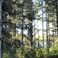 Funding Hunt Begins for McKinleyville Community Forest