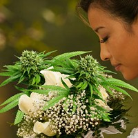 RSVP: I Will Not Attend Your Weed Wedding