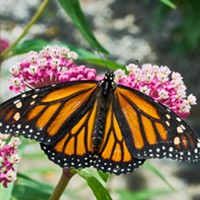 HumBug: The Butterfly House