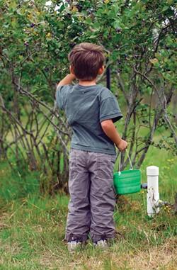 Blueberry picking at Wolfsen Farms - MARK MCKENNA