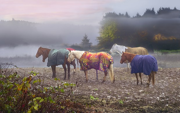 Fog frames horses standing along Mitchell Road off of Myrtle Avenue in Eureka. - JON EXLEY