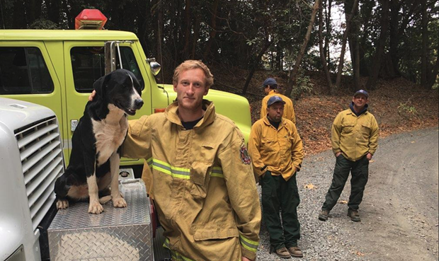 Humboldt County's Strike Team sent us this photo of Miranda Firefighter David Felt with a dog that adopted the crew yesterday. - KENT HULBERT
