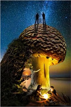 2018-11-10_bill-david-moon-milkyway_10-amanita_1500px.jpg