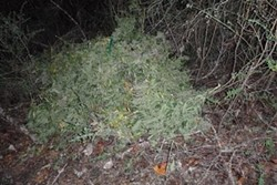 Marijuana found over an embankment of State Route 36 . - HCSO