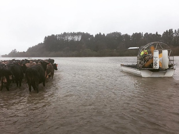 Humboldt County Sheriff's Office special services deputies and Search and Rescue Posse members help move cattle out of flood areas. - HCSO