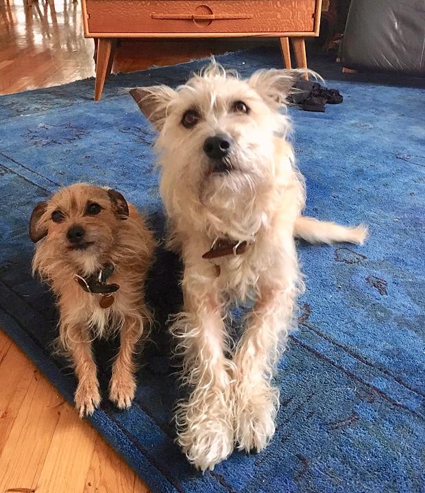 Frida (left) and Louise - PHOTO COURTESY OF JACQUI LANGELAND