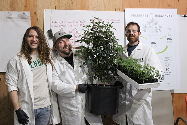 Left to right: HendRx Farms CEO Daniel Hendricks, Humboldt Seed Co. founder Nat Pennington and HendRx Farms Head of Cultivation Skyler Palmer pose with the Vanilla Frosting cannabis strain found in the phenotype mega hunt that sorted through 10,000 individual plants to find new strains. - PHOTO BY THADEUS GREENSON