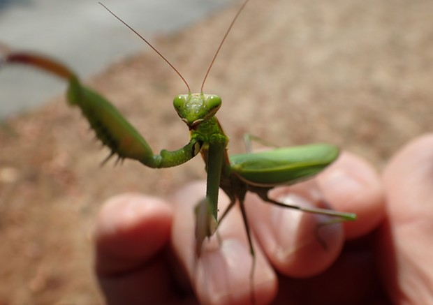 Mantis selfie got the best laugh from the kids. - PHOTO BY ANTHONY WESTKAMPER