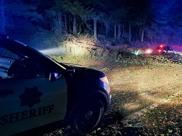 One of the many trees that came down during the storm. - HCSO