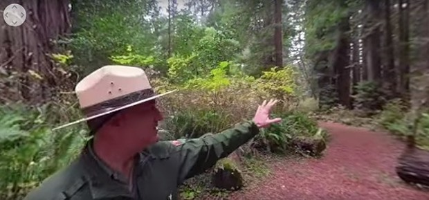 Still from a virtual old growth tour. - YOUTUBE