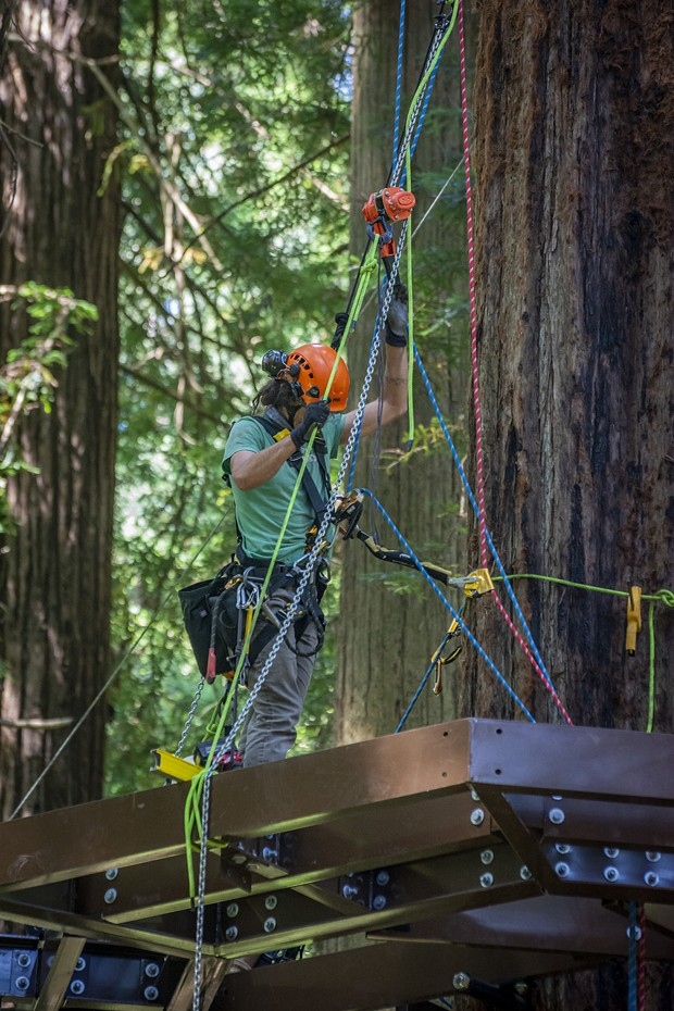 The Synergo aerial construction workers are skilled at protecting their own safety with climbing gear as well as installing the aluminum beams that form the base of the Redwood Sky Walk platforms high up in the redwood trees. - PHOTO BY MARK LARSON
