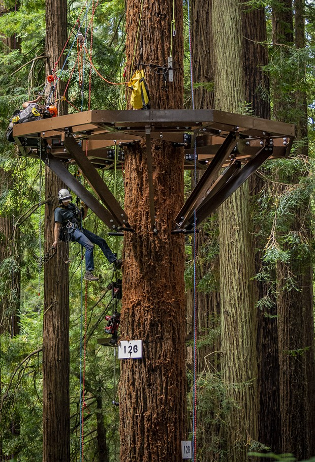 A Synergo aerial construction worker rappelled down from the Redwood Sky Walk platform that he and a co-worker were installing. - PHOTO BY MARK LARSON