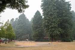 Trees at Sequoia Park appear shrouded in fog as smoke from wildfires in Oregon and California blankets the North Coast. - PHOTO BY MARK MCKENNA
