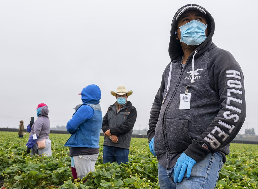 Jose Suarez, a strawberry farmworker, wears a medical face mask as he stands near rows of strawberry fields in Watsonville, California, on Wednesday, July 29, 2020.