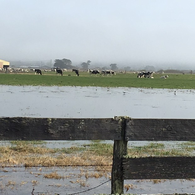 King tide flooding on Jackson Ranch Road in Arcata in November. - KIMBERLY WEAR