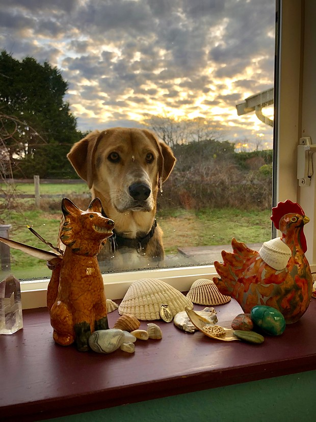 """Dogs Winner """"Sharing Sink Duties"""" """"Our dog came home from the shelter March 21, 2020 and became our Covid Hero Dog. He even found a way to keep us company while we do dishes."""" - BY D. MOLOFSKY"""
