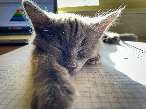 "Cats Winner ""Napping on my Notes"" ""Speedy loves napping on me but when I'm busy with school, he just plops down wherever."" - BY GOWN VANG"