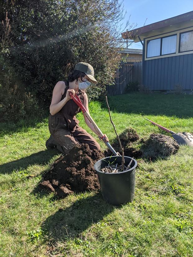 Eva Hogue, a Cooperation Humboldt garden installer, planting a fruit tree. - COOPERATION HUMBOLDT