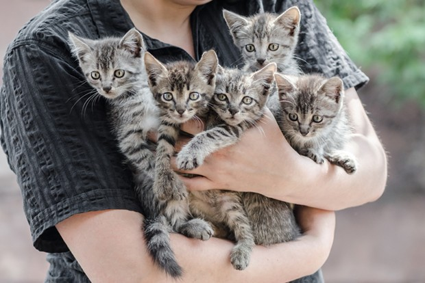 A proposed animal ordinance in Eureka would require cat owners with more than four to get a fancier's license while dog owners would need to do the same with four or more dogs and reptile owners with more than 10. - SHUTTERSTOCK