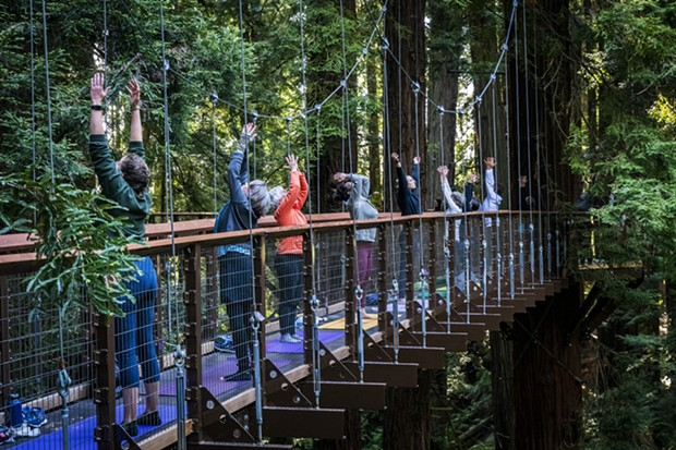 Three yoga instructors from the Pali Yoga Studio interspersed themselves among participants on the suspended walkways and tree platforms of the Redwood Sky Walk. - PHOTO BY MARK LARSON