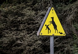 A sign along the Gold Bluffs road warns to avoid Roosevelt elk cows with calves. - PHOTO BY MARK LARSON