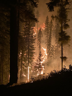 """The McCash Fire was """"very active"""" yesterday, growing by nearly 50 percent. - US FOREST SERVICE"""