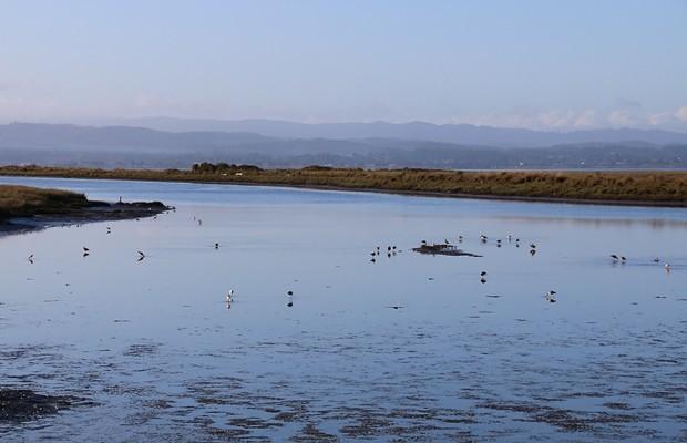 Biking benefits: the bitty birds, the blue of the bay. - JENNIFER SAVAGE