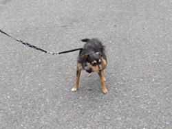 On a leash and out of the poop, please! - LINDA STANSBERRY