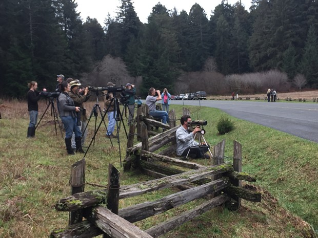 A crowd gathers to watch the Great Gray Owl on Thursday morning. - ROB FOWLER