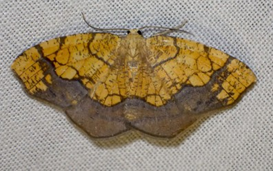 This moth is still a mystery, too. Anyone? - ANTHONY WESTKAMPER