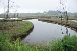 The recently restored PalCo Marsh. - MARK MCKENNA