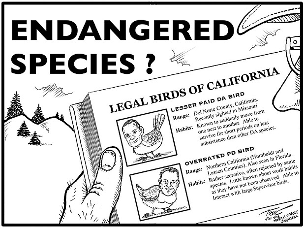 Legal Birds of California: The Lesser Paid DA Bird and the Overrated PD Bird. - CARTOON BY TERRY TORGERSON