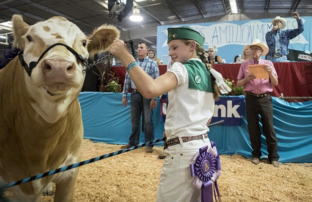 Jocie Hague, of the Arcata Bottoms 4-H club, showed off her Grand Champion Hereford-Charolais cross to attract bids for auctioneer Lee Mora during the Junior Livestock Auction at the Humboldt County Fair on Sunday, Aug. 27. - MARK LARSON