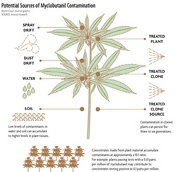 This first place CNPA award winner for Informational Graphic went with a story on cannabis contamination. - ILLUSTRATION BY HOLLY HARVEY