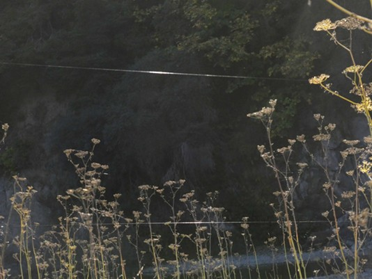 Ballooning spider webbing festoons bushes were they landed. - ANTHONY WESTKAMPER