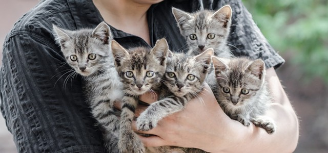 COVID-19 Could Yield a Kitten Boom or Bust