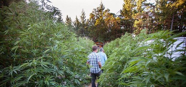 Humboldt Supervisors Consider New Cannabis Ordinance