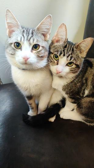 Photo Contest 2021 - Cats