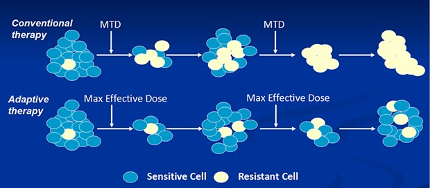 Unlike conventional chemotherapy, which uses the maximum tolerated dose of chemo drugs, adaptive therapy uses smaller doses that leave enough sensitive cells to essentially crowd out resistant cells.